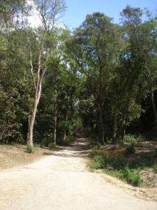 Juste à l'entrée du camping, les pistes cyclables vous amènent à la plage de Saint Jean de Monts