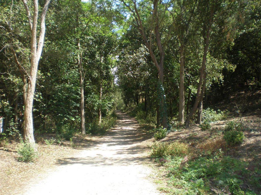 La forêt de St Jean de Monts