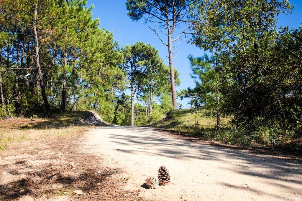 La forêt de Saint Jean de Monts